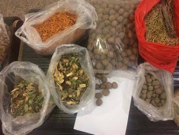 Operação Thunder - plantas, frutos e sementes apreendidos